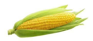 在白色背景隔绝的唯一玉米穗 免版税库存照片