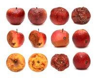 在白色背景隔绝的大套不同的腐烂的苹果 免版税库存图片