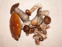 在白色背景隔绝的大蘑菇收藏 库存照片