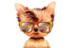 在白色背景隔绝的太阳镜的狗 免版税库存图片