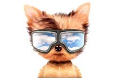 在白色背景隔绝的太阳镜的狗 向量例证