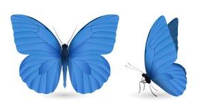 在白色背景隔绝的套蝴蝶 免版税库存图片