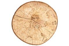 在白色背景隔绝的山毛榉树树桩顶视图  图库摄影