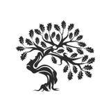 在白色背景隔绝的巨大和神圣的橡树剪影商标徽章 库存照片