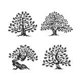 在白色背景隔绝的巨大和神圣的橡树剪影商标 免版税库存图片