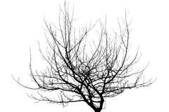 在白色背景隔绝的干燥树枝 免版税库存图片