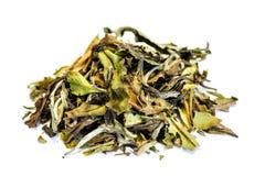 在白色背景隔绝的干绿茶堆 免版税库存图片