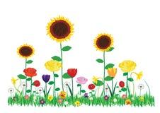 在白色背景隔绝的庭院里上色美丽的开花的花的传染媒介例证 库存照片