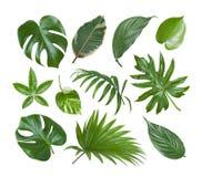 在白色背景隔绝的异乎寻常的植物绿色叶子拼贴画  免版税库存图片