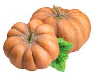 在白色背景隔绝的新鲜的橙色南瓜 库存照片
