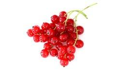 在白色背景隔绝的新鲜的红浆果果子 库存照片