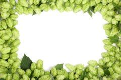 在白色背景隔绝的新鲜的绿色啤酒花球果树框架  与拷贝空间的顶视图您的文本的 库存图片