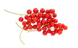 在白色背景隔绝的无核小葡萄干 红浆果分支 免版税库存照片