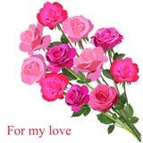 在白色背景隔绝的明亮的桃红色玫瑰大花束  向量例证