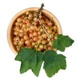 在白色背景隔绝的木碗的白色无核小葡萄干莓果 免版税库存图片