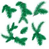 在白色背景隔绝的杉树分支传染媒介圣诞节云杉常青自然寒假 免版税库存照片