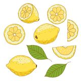在白色背景隔绝的柠檬手拉 免版税库存图片