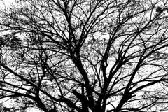 在白色背景隔绝的树剪影 免版税库存照片