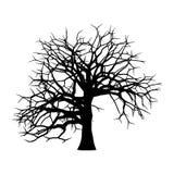 在白色背景隔绝的树的剪影 库存图片