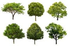 在白色背景隔绝的树集合 库存照片