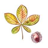 在白色背景隔绝的栗子手拉的水彩绘画 秋天图象叶子范围xxxl 额嘴装饰飞行例证图象其纸部分燕子水彩 免版税库存照片