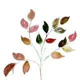 在白色背景隔绝的水彩叶子 免版税库存照片