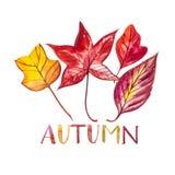 在白色背景隔绝的汇集美丽的五颜六色的秋叶 提供例证公园池塘天鹅结构水彩的子项 词-秋天 图库摄影