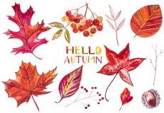 在白色背景隔绝的汇集美丽的五颜六色的秋叶 提供例证公园池塘天鹅结构水彩的子项 库存照片
