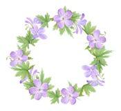 在白色背景隔绝的淡紫色大竺葵花水彩花圈  为网络设计,化妆用品完善设计,包装, 向量例证