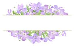 在白色背景隔绝的淡紫色水彩大竺葵花框架  为商标,设计,化妆用品完善设计,包装, 库存例证