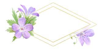 在白色背景隔绝的淡紫色水彩大竺葵花菱形框架  为商标,设计,化妆用品完善设计 皇族释放例证