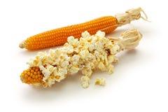 在白色背景隔绝的玉米棒的玉米花 库存图片