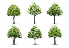 在白色背景隔绝的现实树的收藏 风景设计、公园和室外图表的自然物 向量 向量例证