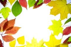 在白色背景隔绝的秋叶 库存照片