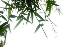 在白色背景隔绝的竹叶子 库存照片