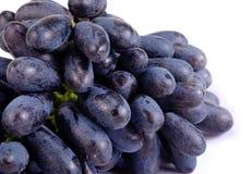 在白色背景隔绝的紫色葡萄 免版税库存图片