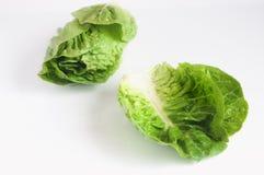 在白色背景隔绝的绿色罗马莴苣 库存照片