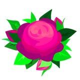 在白色背景隔绝的网紫色蓝色罗斯花,性感和美丽和玫瑰色芽 r 向量例证