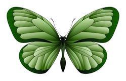 在白色背景隔绝的美丽的蝴蝶 免版税库存照片