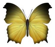在白色背景隔绝的美丽的蝴蝶 向量例证