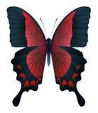在白色背景隔绝的美丽的蝴蝶 皇族释放例证