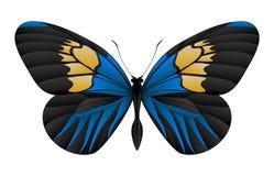 在白色背景隔绝的美丽的蝴蝶 库存照片