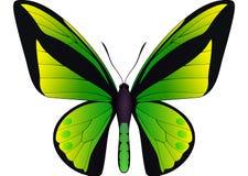 在白色背景隔绝的美丽的蝴蝶 免版税库存图片