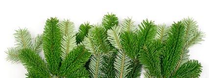 在白色背景隔绝的自然绿色云杉的枝杈 免版税库存图片