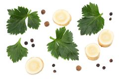 在白色背景隔绝的芹菜叶子 芹菜查出的白色 健康的食物 库存照片