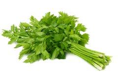 在白色背景隔绝的芹菜叶子 芹菜查出的白色 健康的食物 图库摄影