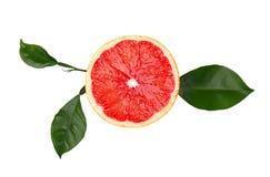 在白色背景隔绝的葡萄柚片 新鲜水果 Brot 与绿色叶子的新鲜的葡萄柚 库存照片
