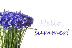在白色背景隔绝的蓝色矢车菊 你好夏天字法 库存照片