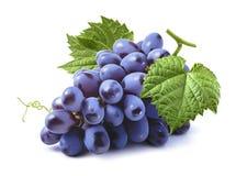 在白色背景隔绝的蓝色葡萄束 免版税图库摄影