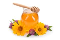 在白色背景隔绝的蜂蜜和三叶草花 库存照片